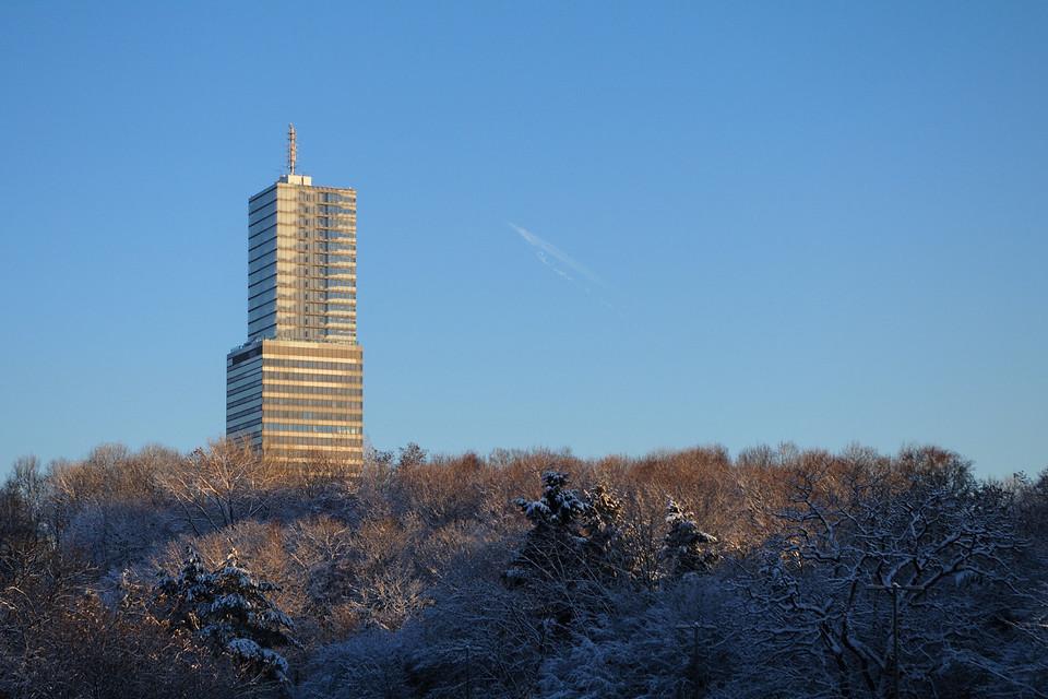 Wald vor dem KölnTurm