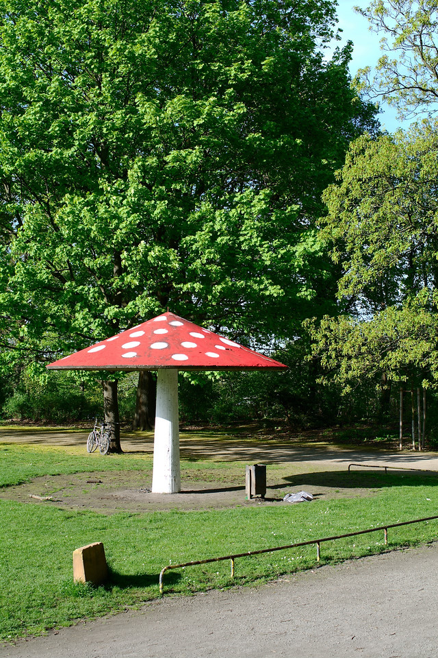 Fliegenpilz im Blücherpark