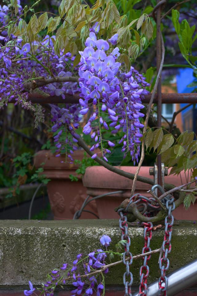 Blumen und Kette