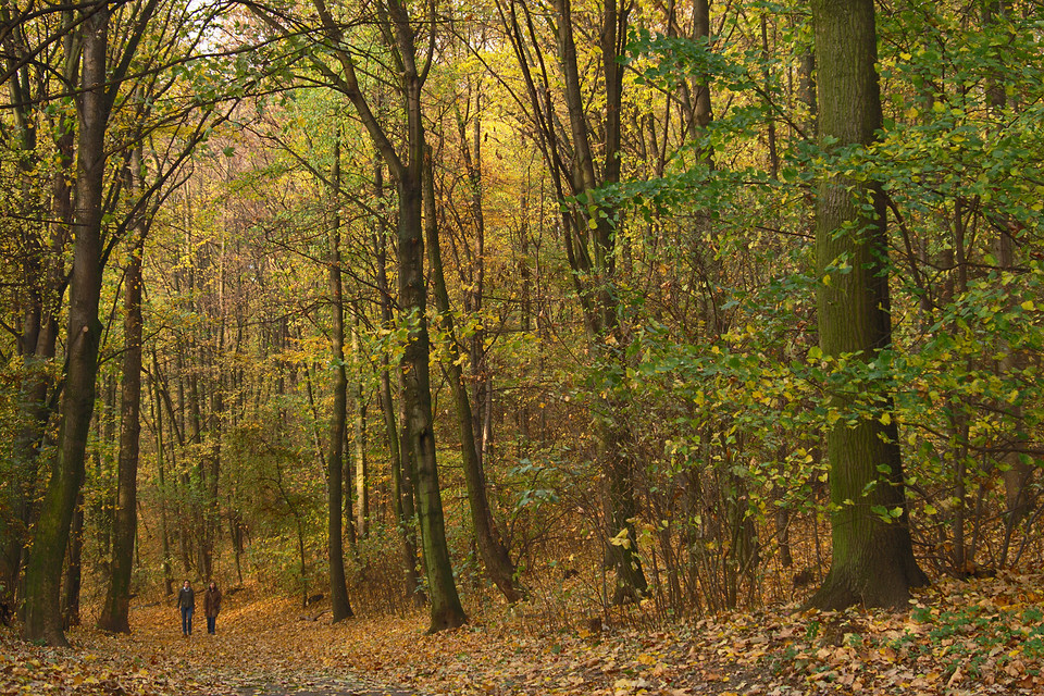 Herbst auf dem Mont Klamott