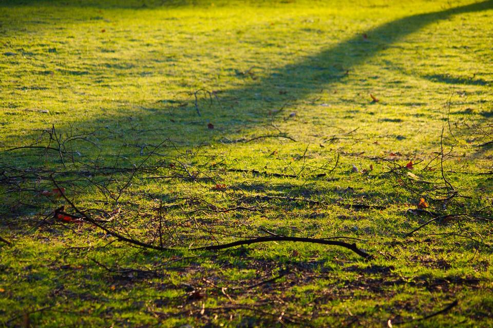 Lange Schatten im Gras